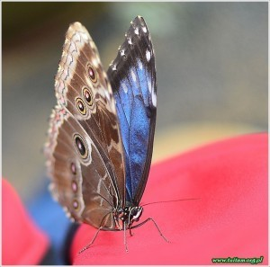Motyl_04