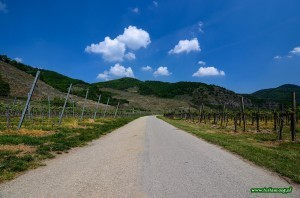 Wachau - austriacka dolina winnic