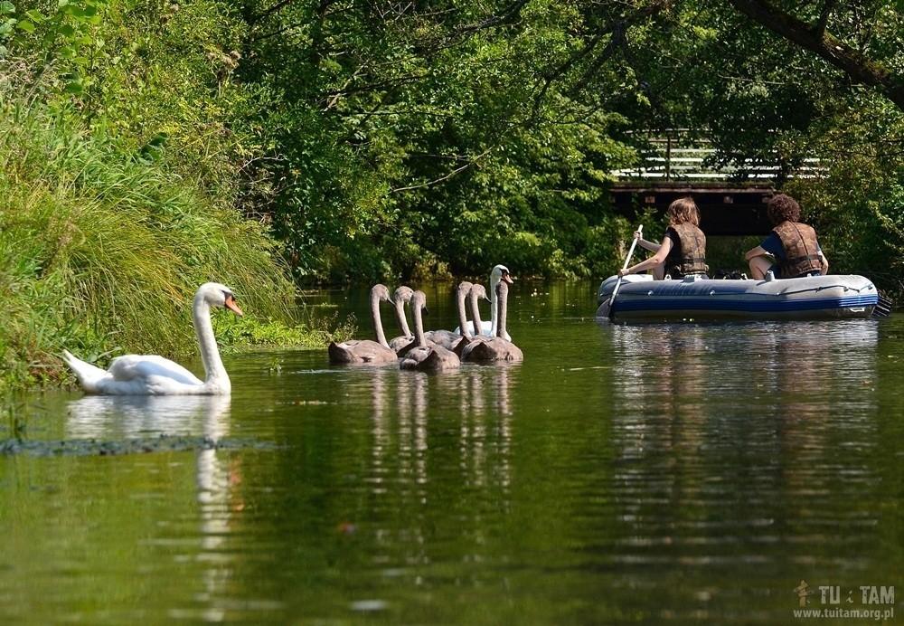 spływ pontonowy rzeką Białką, Lelów, rzeka Białka